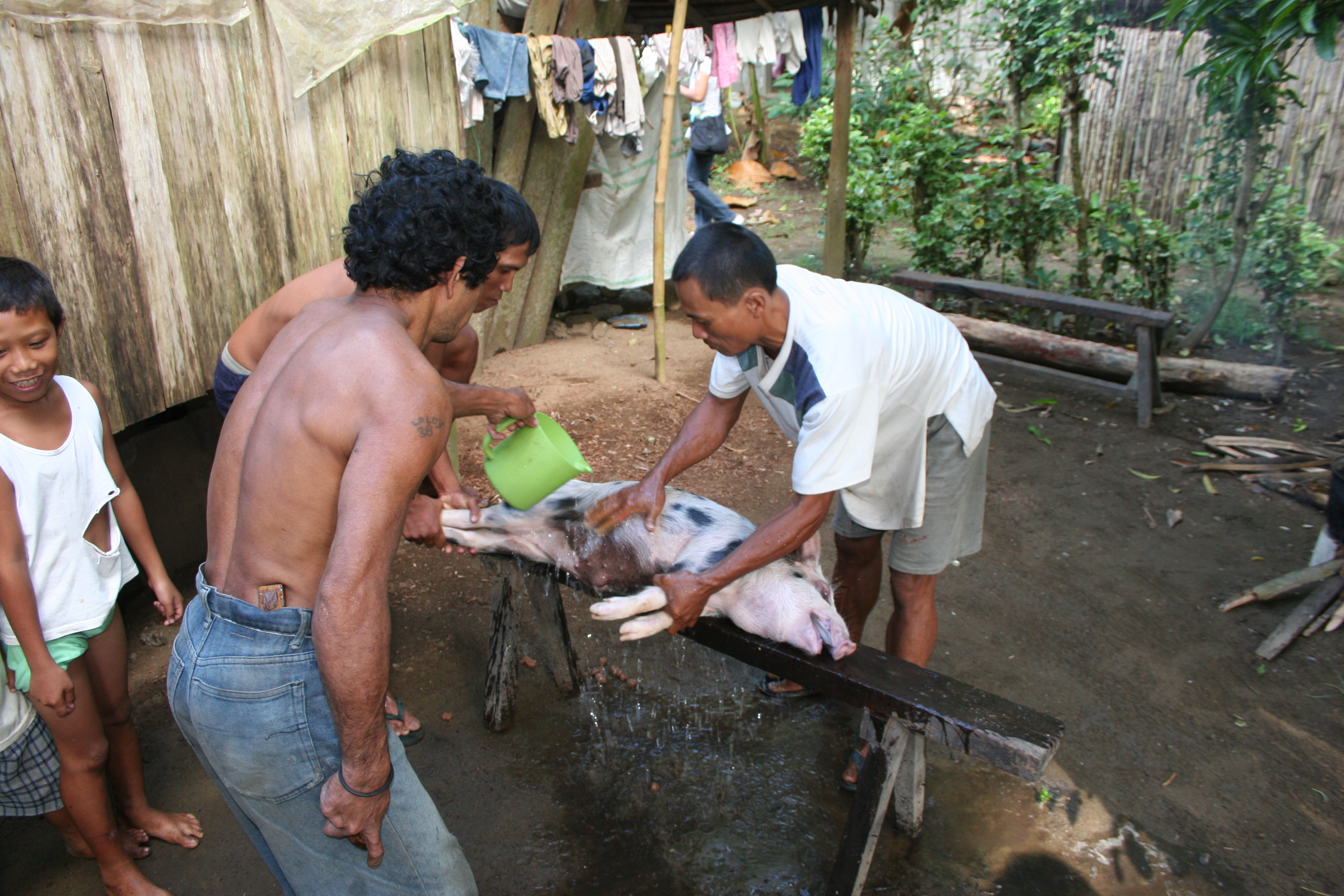 Image result for Butchering a Pig Philippines Davao City